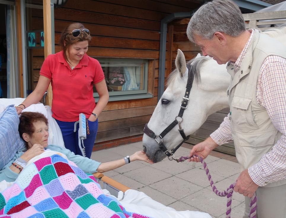 horse visiting ipu